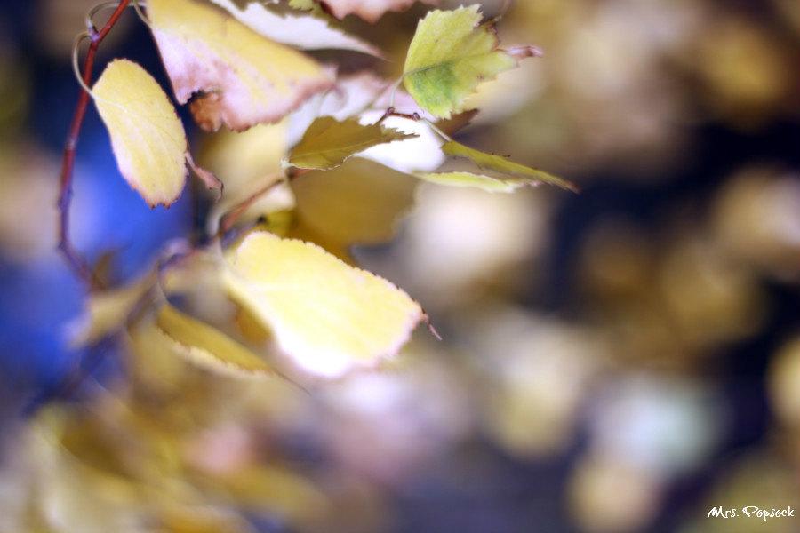 Blätter im Wind#