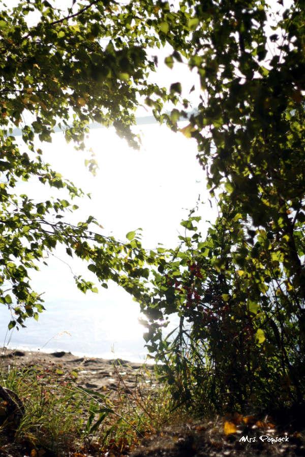 Herbstsonne im Wasser mit Bäumen