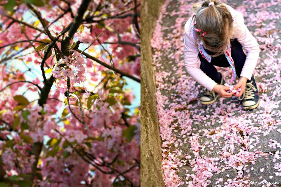 kirschblüten+ mini me