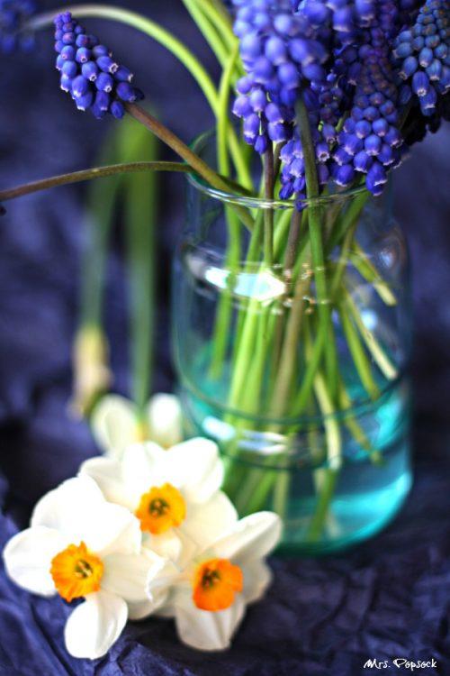 Blütenpracht in Dunkelblau