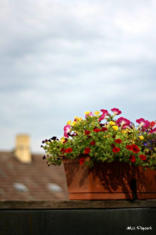 Blümelei aufm Dach