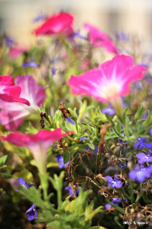 malerische Blumen im Dachgarten
