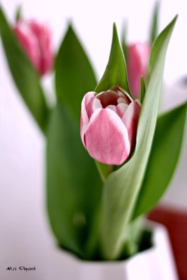 tulpen power